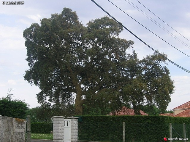 Le chêne liège GBPIX_photo_208659