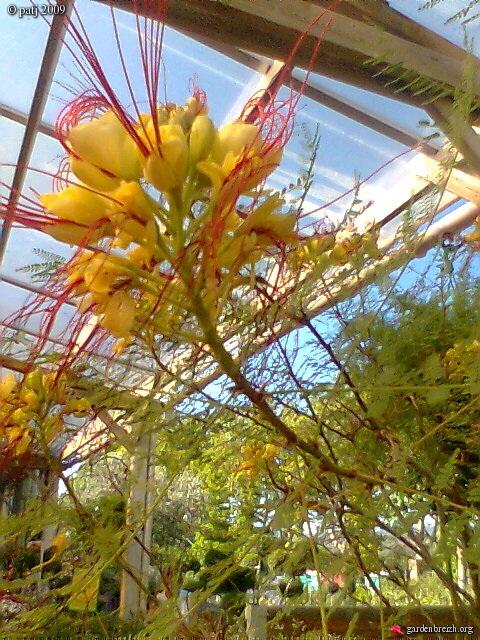 Les botanistes  - Page 6 GBPIX_photo_264317