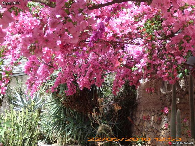 Les botanistes  - Page 2 GBPIX_photo_361240
