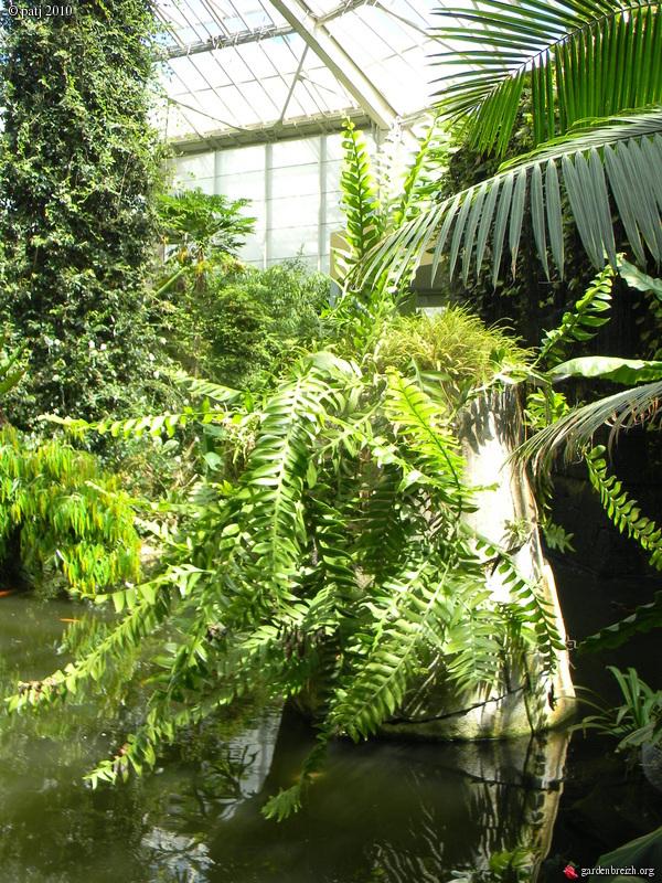 Epiphyllum chrysocardium - Page 2 GBPIX_photo_392984