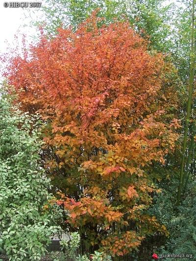 feuillages d'automne 2016 GBPIX_photo_42620