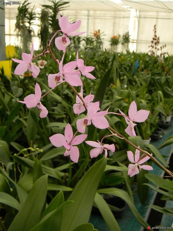 Les botanistes  - Page 6 GBPIX_photo_409144