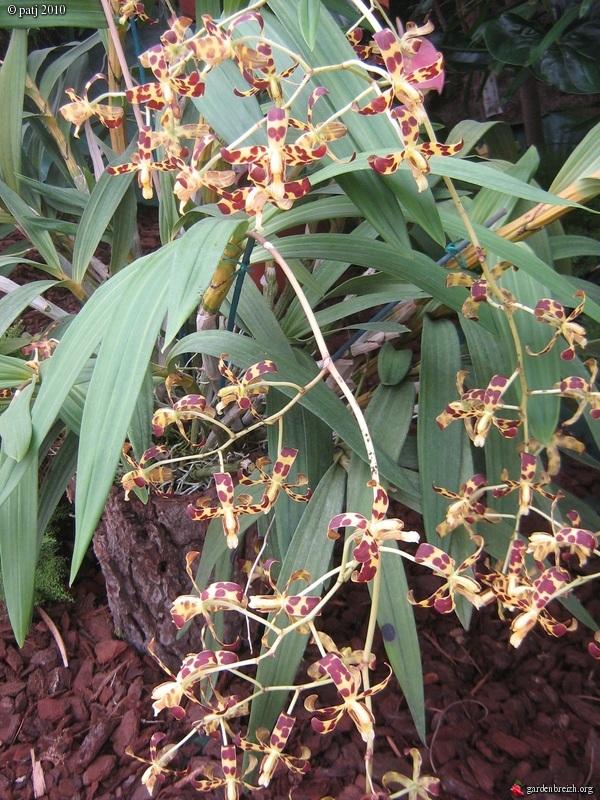 Les botanistes  - Page 5 GBPIX_photo_409395