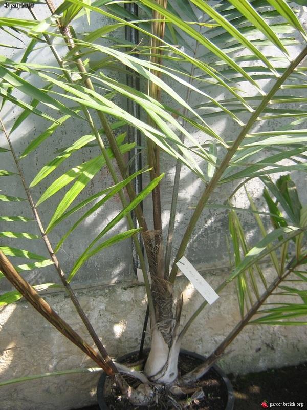 Les botanistes  - Page 8 GBPIX_photo_412298