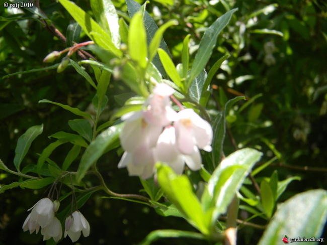 Les botanistes  - Page 7 GBPIX_photo_412498