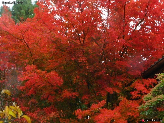 Mon jardin Médocain, quelques vues au fil du temps GBPIX_photo_432739