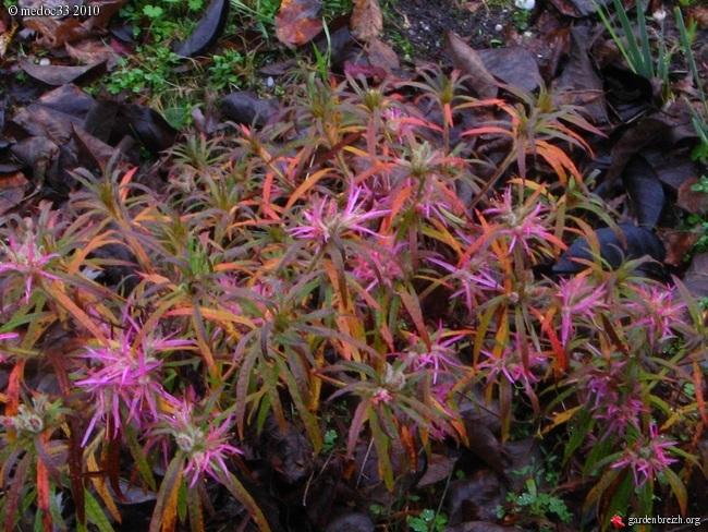 Rhododendron - espèces, variétés, floraisons GBPIX_photo_439910