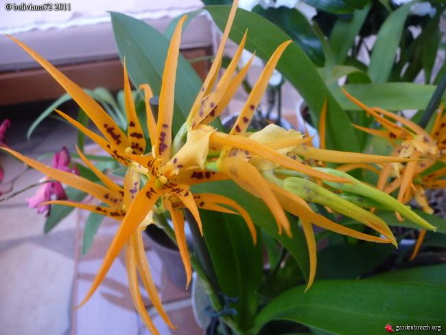 Floraisons de janvier GBPIX_photo_449999