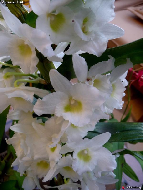 Floraisons de janvier GBPIX_photo_450001