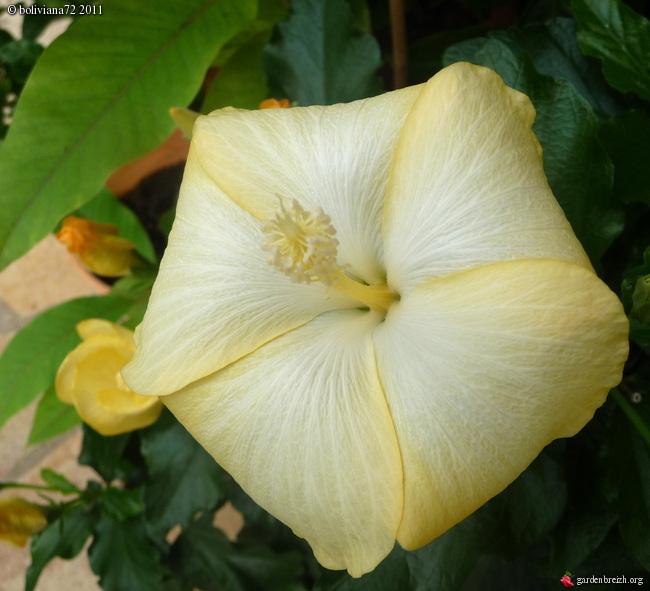 Floraisons de janvier - Page 2 GBPIX_photo_450002
