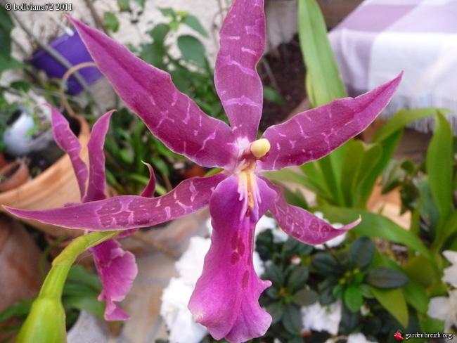 Floraisons de janvier GBPIX_photo_450006
