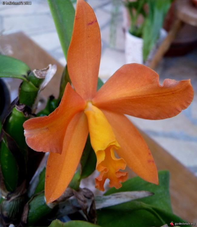 Floraisons de janvier - Page 2 GBPIX_photo_451353