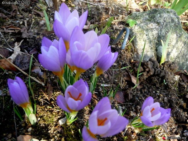 Floraisons de janvier - Page 3 GBPIX_photo_451958