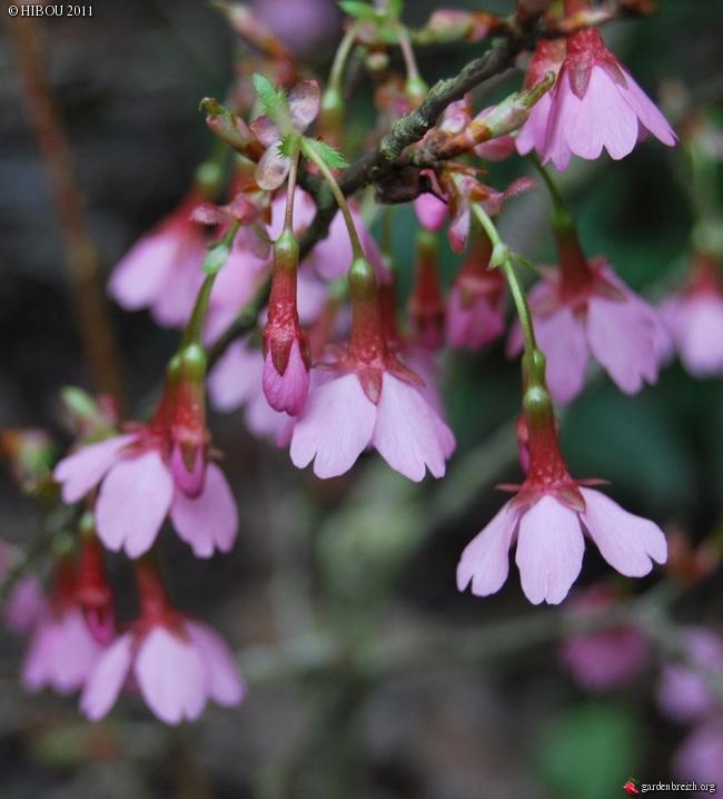 couleurs d'hiver au jardin  - Page 3 GBPIX_photo_457823