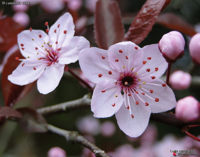 Floraisons de Mars GBPIX_photo_458363