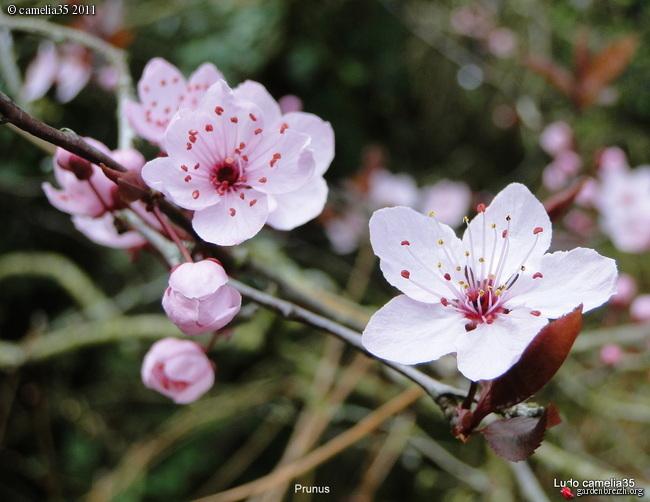Floraisons de Mars GBPIX_photo_458365