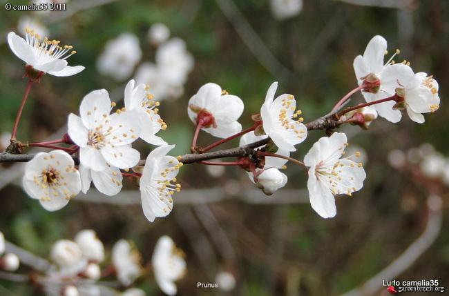 Floraisons de Mars GBPIX_photo_458368
