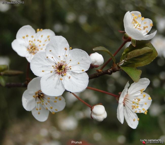 Floraisons de Mars GBPIX_photo_458369