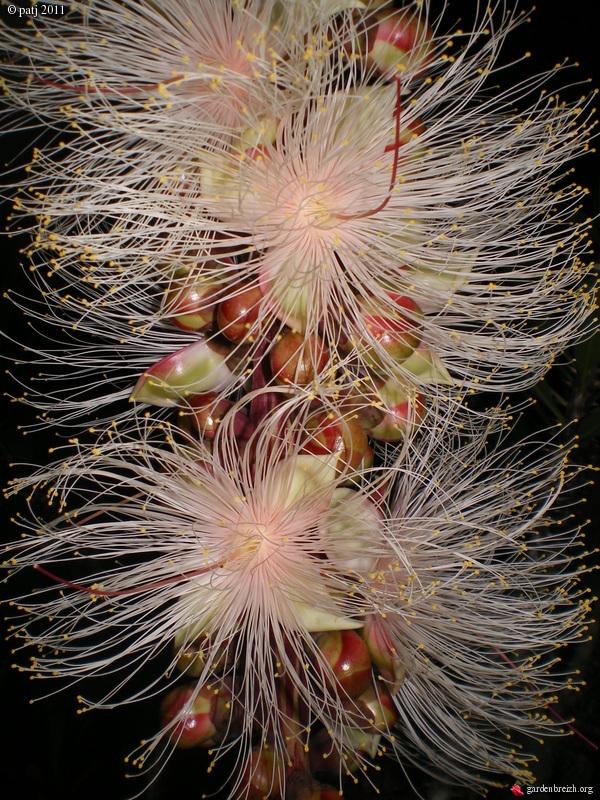 Les botanistes  - Page 6 GBPIX_photo_459045
