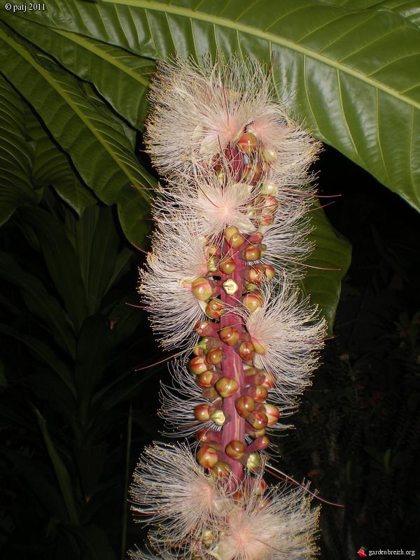 Les botanistes  - Page 6 GBPIX_photo_460039