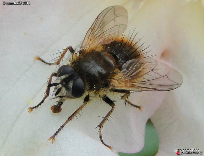 Quelques macros d'insectes GBPIX_photo_464302