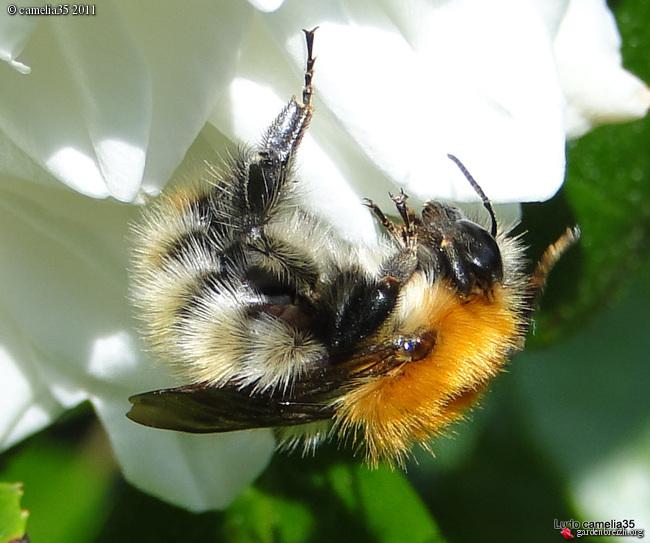 Quelques macros d'insectes GBPIX_photo_470163