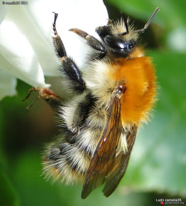 Quelques macros d'insectes GBPIX_photo_470169