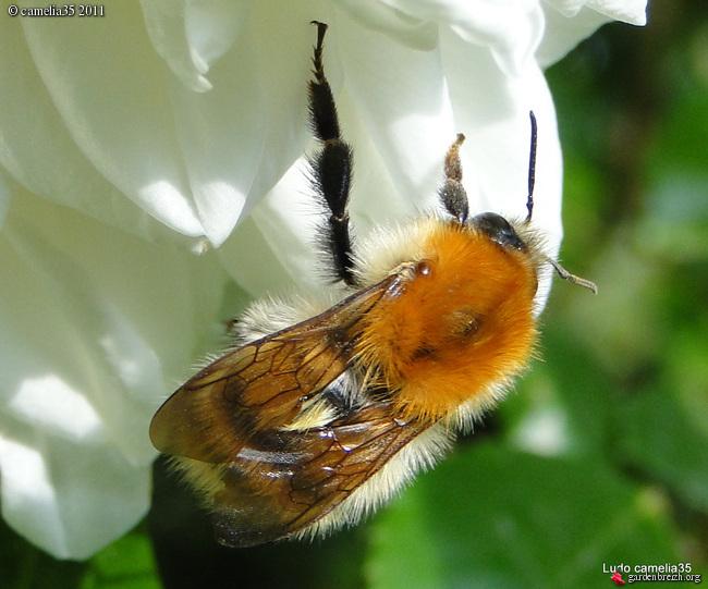 Quelques macros d'insectes GBPIX_photo_470173