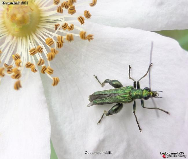 Quelques macros d'insectes - Page 2 GBPIX_photo_470577