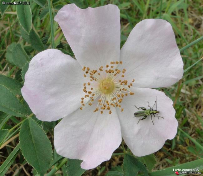 Quelques macros d'insectes - Page 2 GBPIX_photo_470579