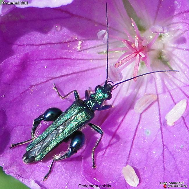 Quelques macros d'insectes - Page 2 GBPIX_photo_470593