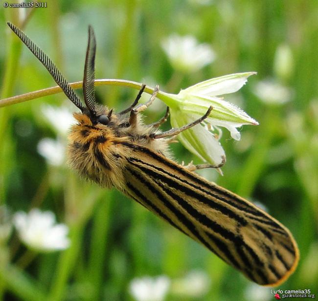Quelques macros d'insectes - Page 2 GBPIX_photo_471184