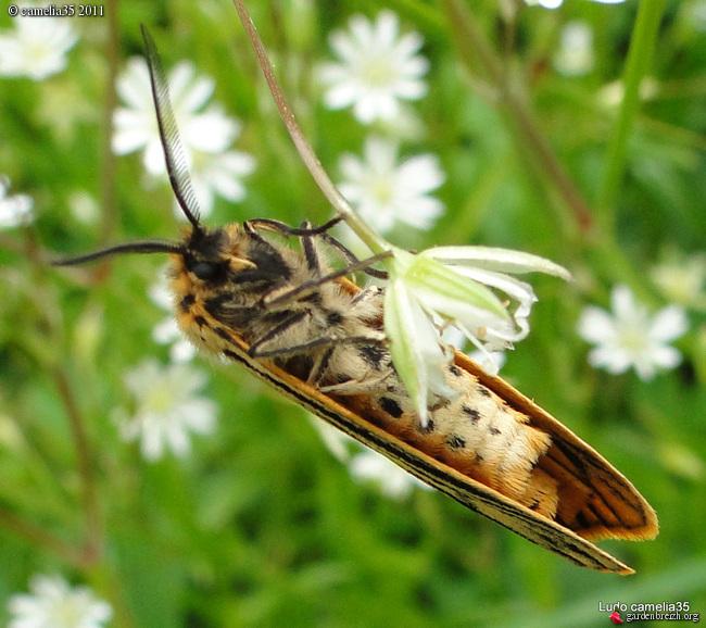 Quelques macros d'insectes - Page 2 GBPIX_photo_471185