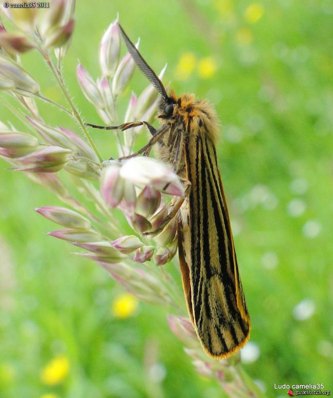 Quelques macros d'insectes - Page 2 GBPIX_photo_471186