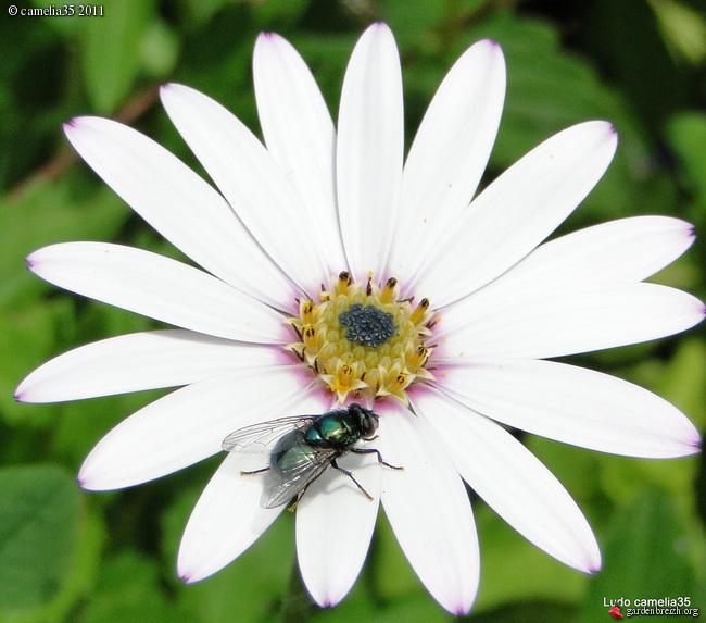 Quelques macros d'insectes - Page 2 GBPIX_photo_471437