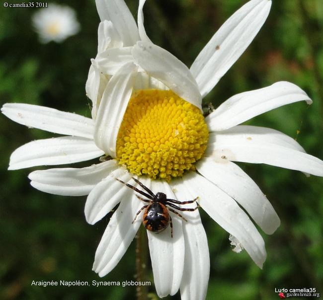 Quelques macros d'insectes - Page 2 GBPIX_photo_474377