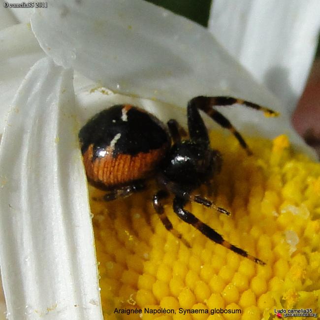 Quelques macros d'insectes - Page 2 GBPIX_photo_474379