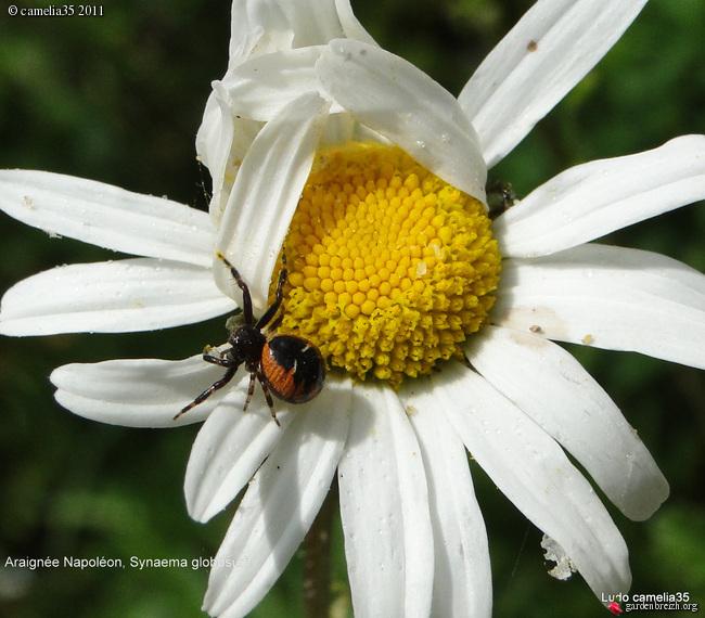 Quelques macros d'insectes - Page 2 GBPIX_photo_474382