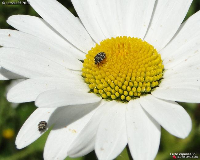 Quelques macros d'insectes - Page 2 GBPIX_photo_474598