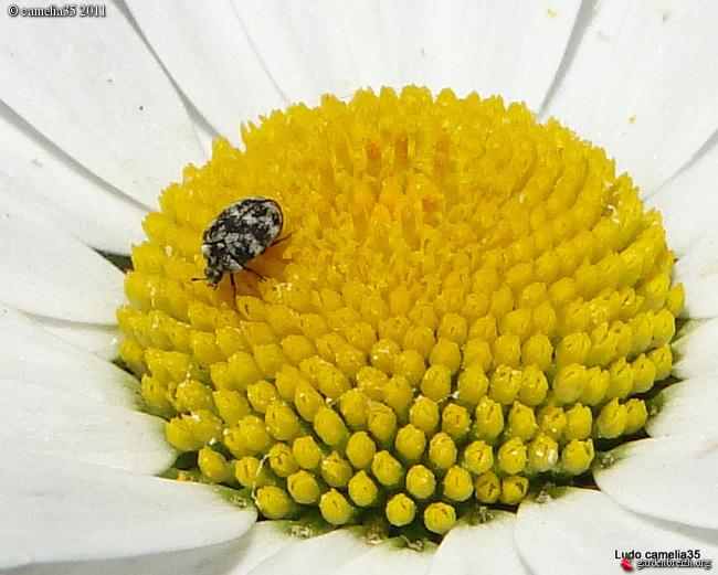 Quelques macros d'insectes - Page 2 GBPIX_photo_474599