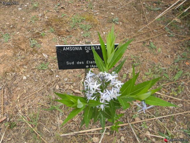 Les botanistes  - Page 5 GBPIX_photo_476356