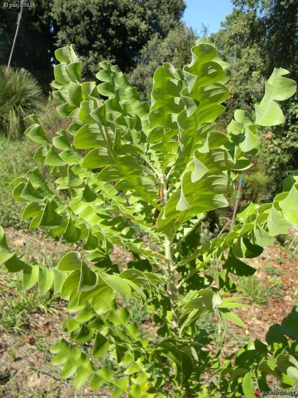 Les botanistes  - Page 6 GBPIX_photo_486023