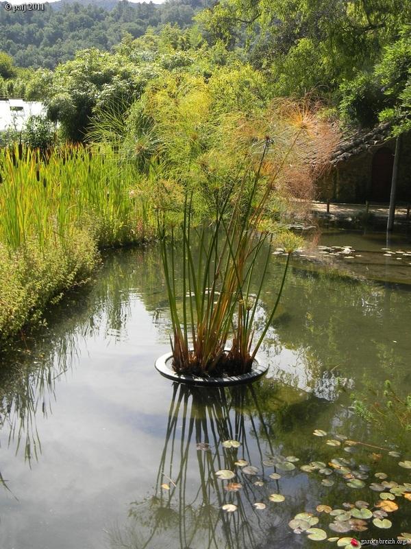 Les botanistes  - Page 7 GBPIX_photo_488918