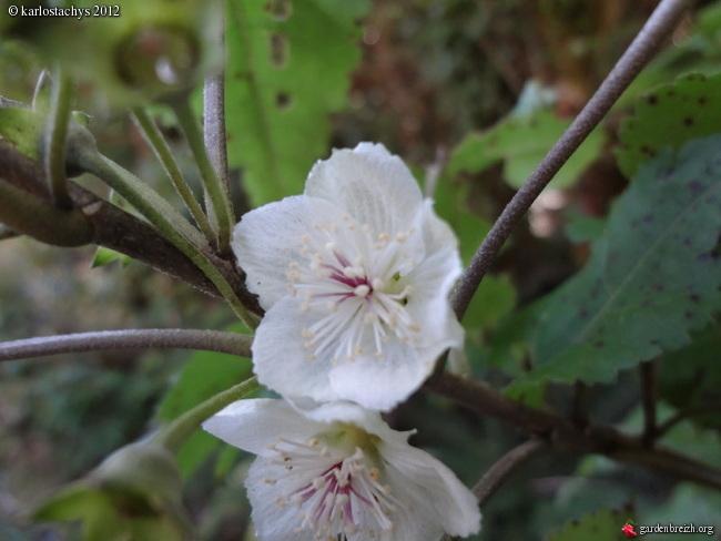 la fleur de Martin du 6 septembre trouvée par Martine GBPIX_photo_516144