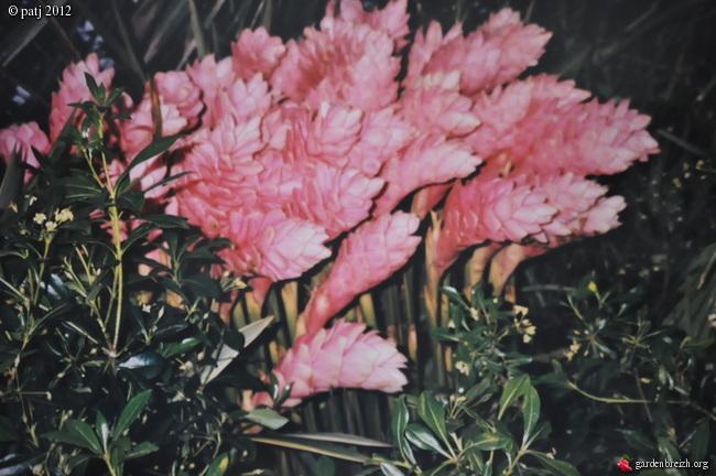 Les botanistes  - Page 5 GBPIX_photo_517564