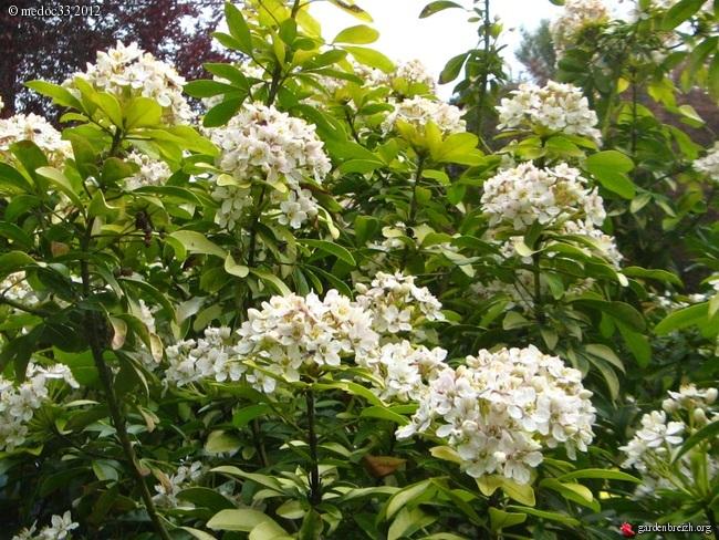 Mon jardin Médocain, quelques vues au fil du temps - Page 2 GBPIX_photo_521545