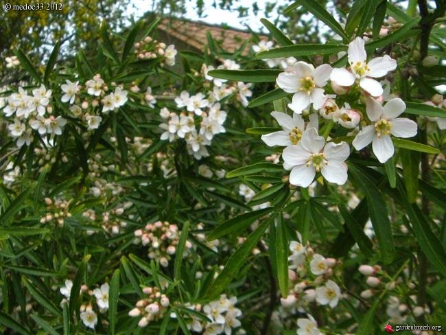 Mon jardin Médocain, quelques vues au fil du temps - Page 2 GBPIX_photo_521546