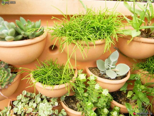 murs végétalisés extérieurs  - Page 3 GBPIX_photo_521715