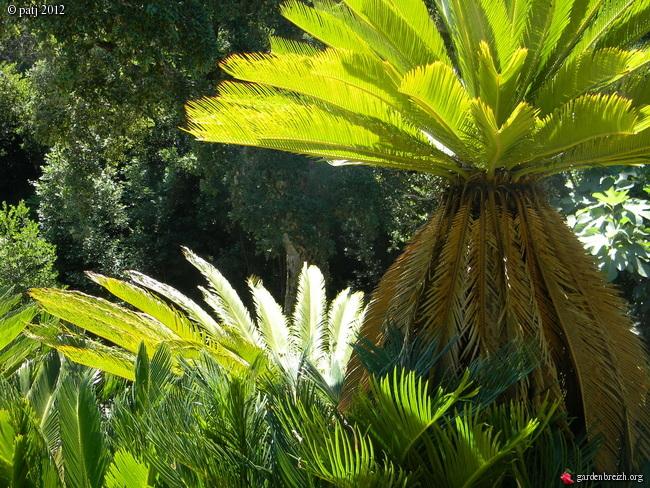 Les botanistes  - Page 8 GBPIX_photo_532322