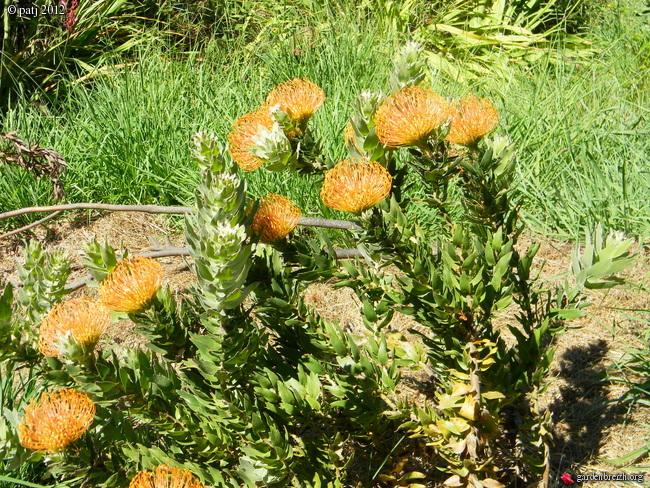 Les botanistes  - Page 8 GBPIX_photo_532561